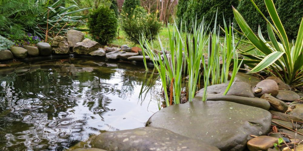 Beautiful,Small,Garden,Pond,With,Stone,Shores,And,Many,Decorative