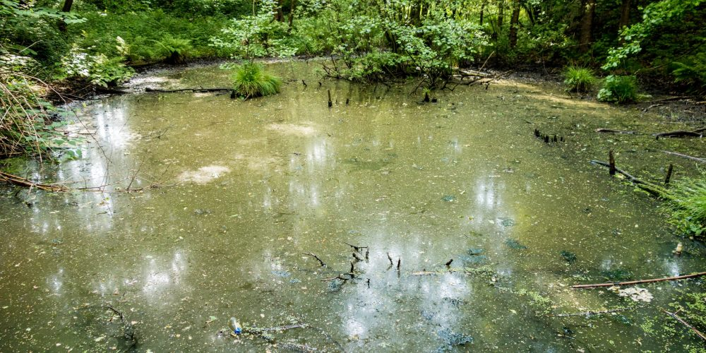Small,Pond,Full,Of,Garbage,And,Water,Flora