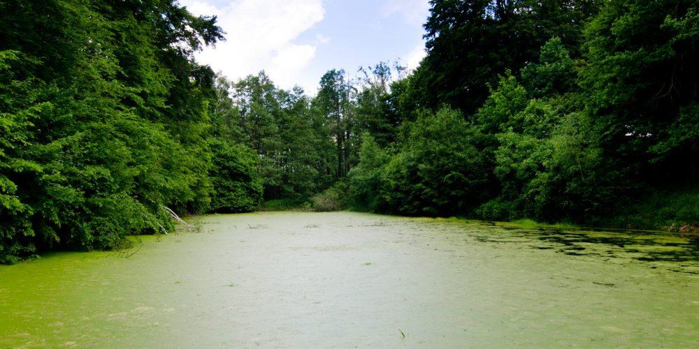Dirty,Green,Pond